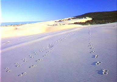 フレーザー島の画像 p1_6