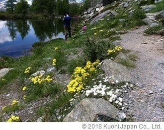 キンポウゲ等の花